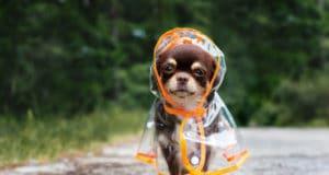 Prepare Your Dog for Rainy Days