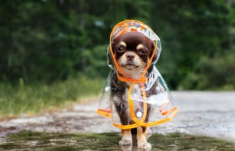 Prepare Your Dog for Rainy Days