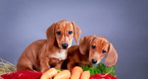 What Human Food is Good for Dogs?