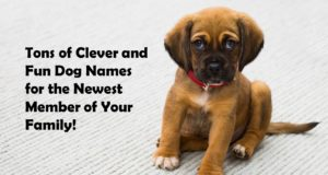 A List of Cool Dog Names