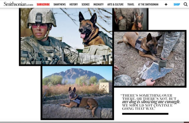 Dyngo the Combat Dog Finds a Home