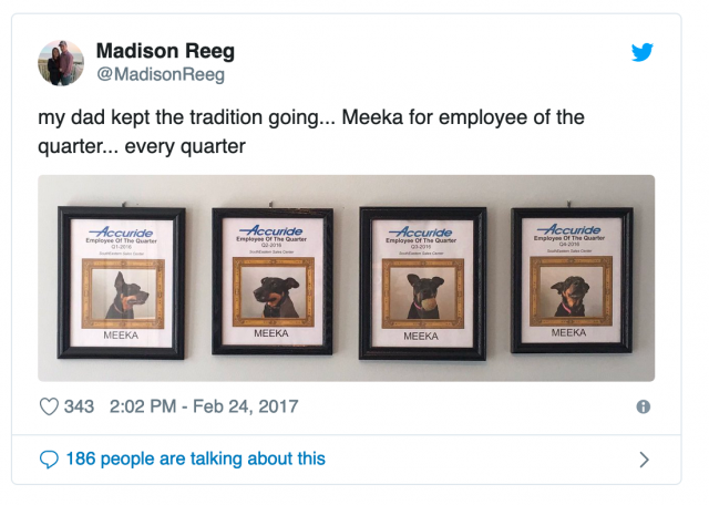 Meeka the Dog is Employee of the Month Again!