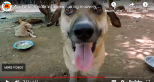 Dog Survives Acid Attack