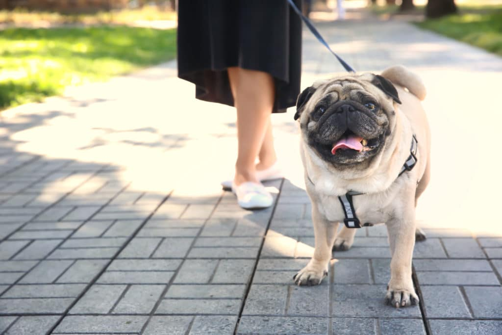 Help Your Overweight Dog Lose Weight