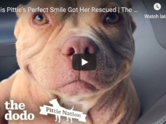 Pitbull Smile