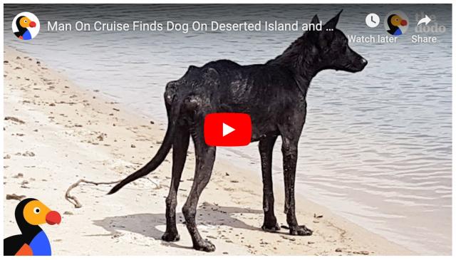 Man rescues dog off desert island
