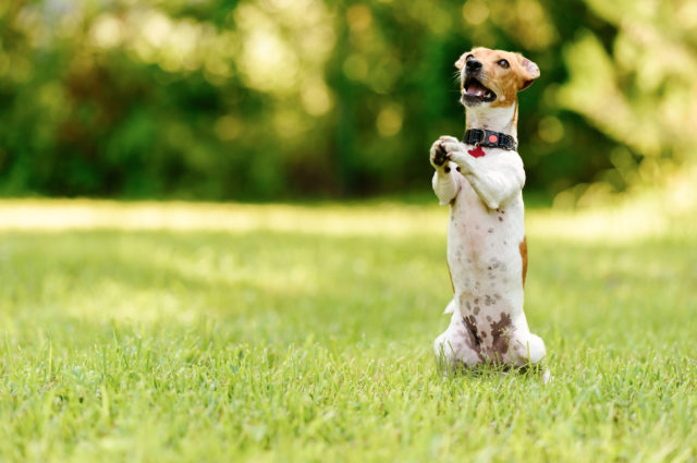 What Should My Dog Eat?