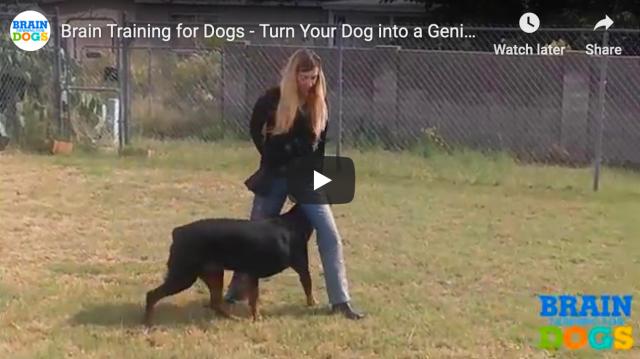 How to Make Your Dog Smarter