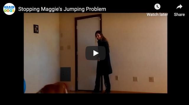 How to Get Your Dog to Stop Jumping
