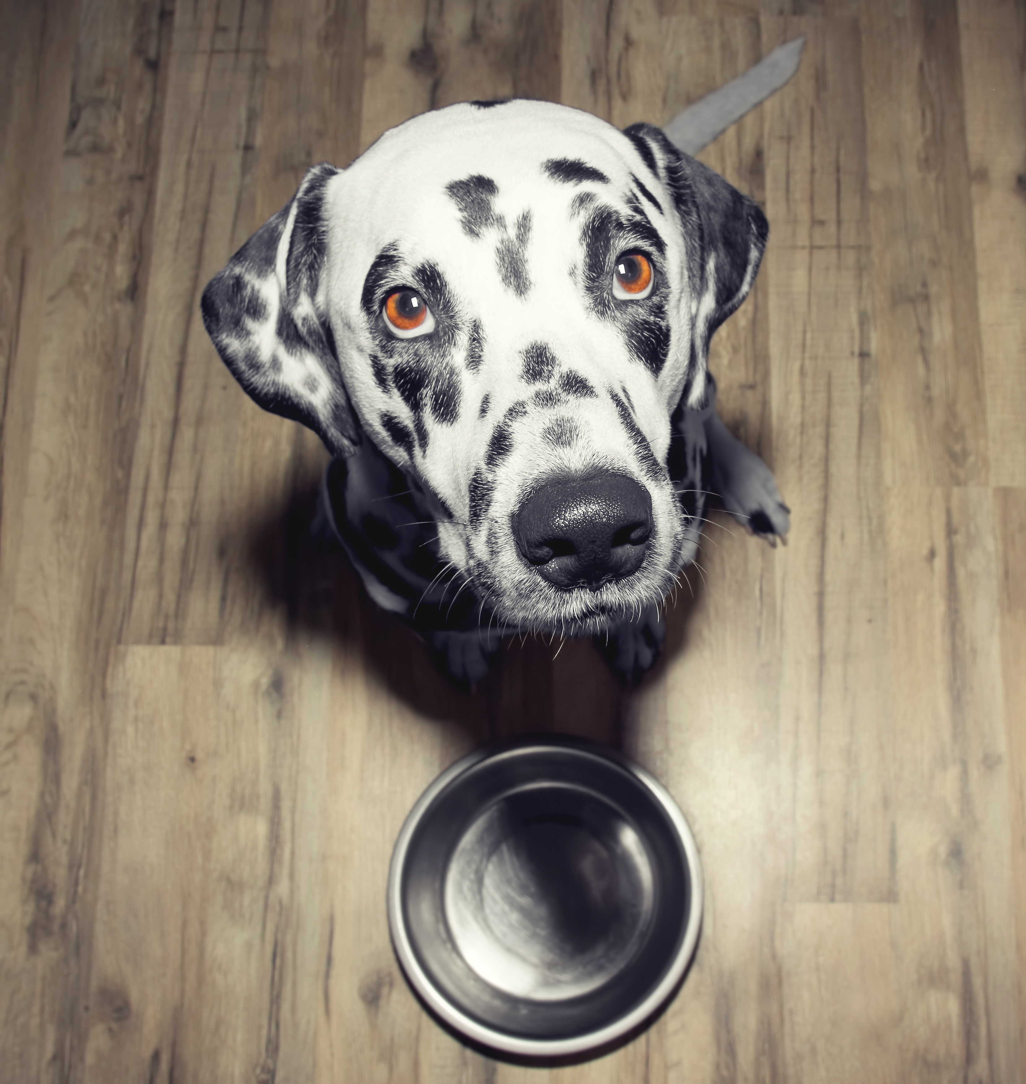 homemade dry kibble recipe for dogs
