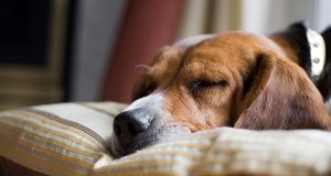 Hidden Dangers for Your Dog in Your Home
