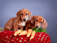 Quick and Healthy Snacks for Dogs