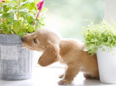 Plants That Are Toxic to Dogs