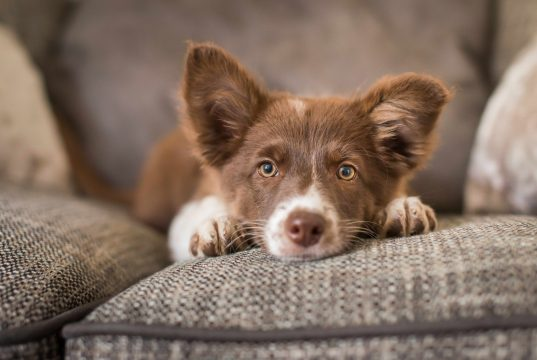 Protect Your Dog from These Common Health Problems
